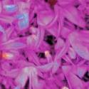 rosaliemieliena