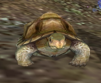 turtle pet, pwi